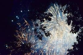 Firework Forest | July 2016